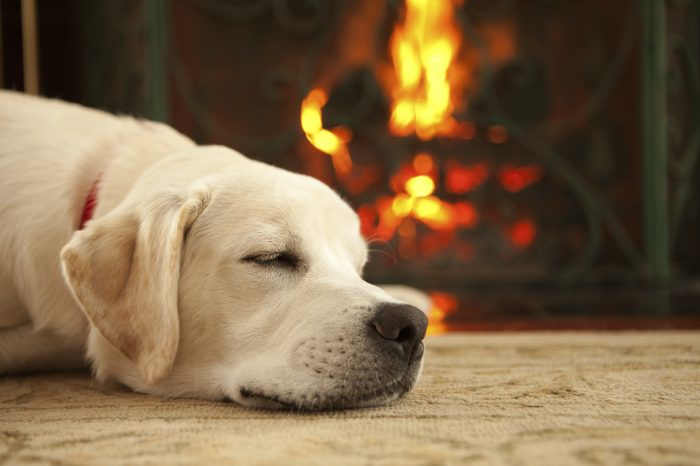 Puppy sleeping by a fireplace livingandlovingfairfield.com