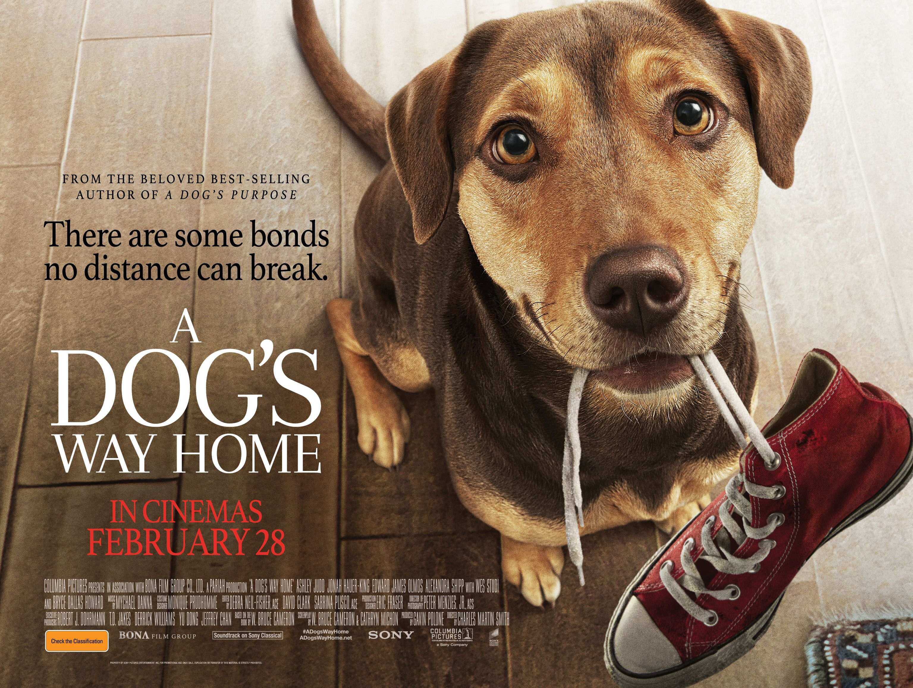 win: a dog's way home movie