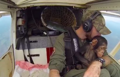 "Pilot Anthony Caere got some unexpected cuddles during his flight, when he rescued 3 year old baby chimpanzee ""Mussa"" and took him to his new home."