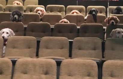 future service dogs practice at the theatre
