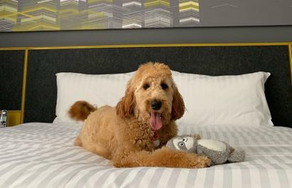 WIN the PAWfect Staycation at Citadines Perth