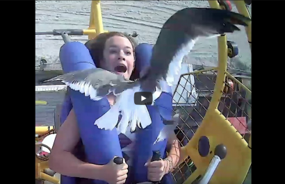 A girl gets smacked in the face by a seagull - watch the video!